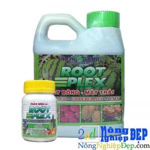 Root Plex