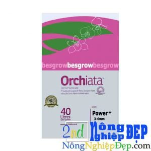 Vo Thong Orchiata 3 6mm